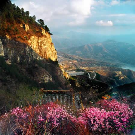 北岳恒山的山桃花-北
