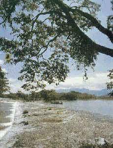 灵渠是世界最早的有闸运河