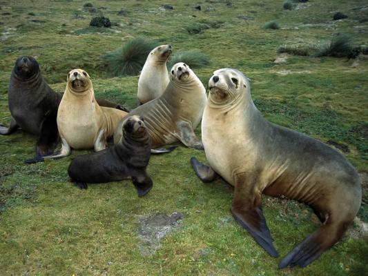国际海豹日---3